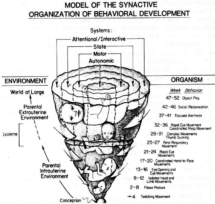 Model of the Synactive Theory of Development. Reproduced