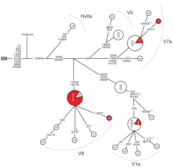 Mitochondrial DNA sequence variation in Finnish patients