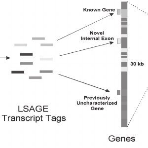 Digital Karyotyping compared to CGH analysis. Genomic DNA