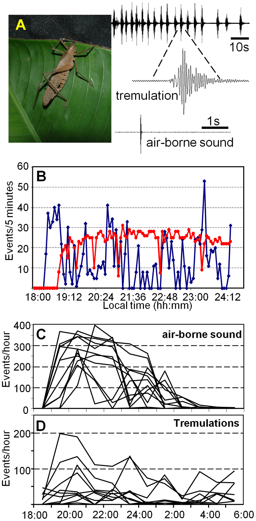 hight resolution of signalling with air borne sound and tremulations a a female docidocercus gigliotosi
