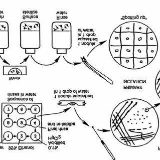 (PDF) Handbook for Rhizobia: Methods in legume-Rhizobium