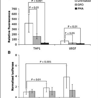 PMA inhibits PHD enzyme activity under normoxic conditions