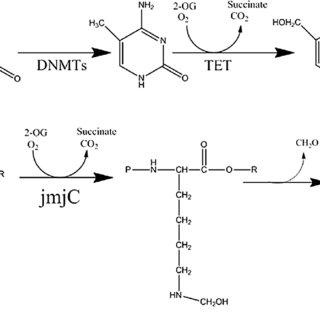 Epigenetic gene regulation and CRC biology. The nucleosome