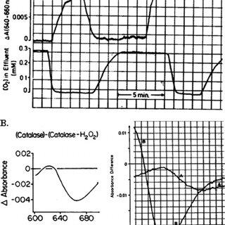 (PDF) Role of Metabolic H2O2 Generation: Redox Signalling