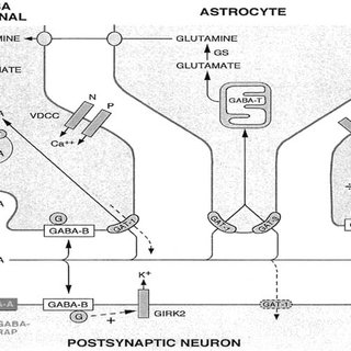 It shows Schematic GABA synapse. Diagram showing the main