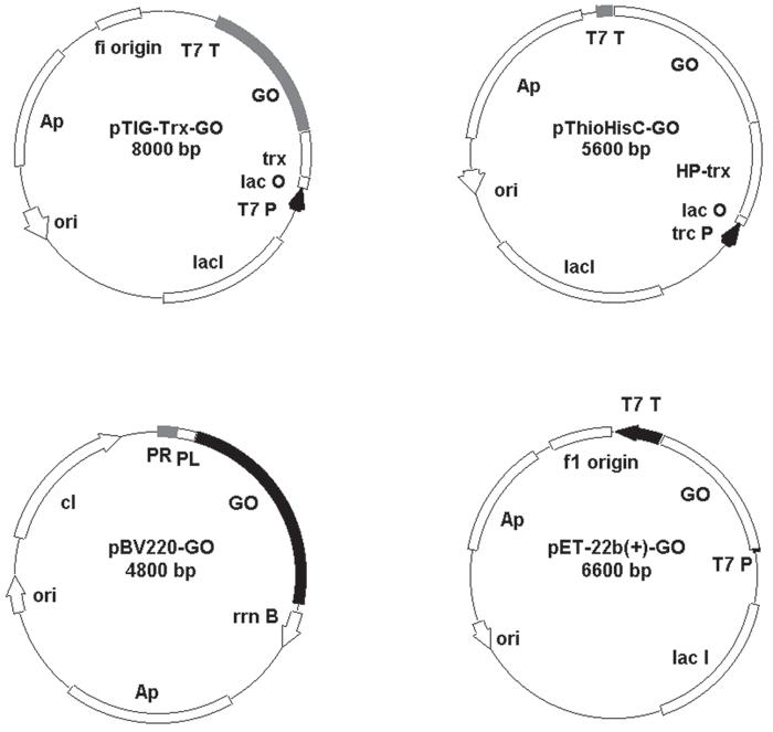 Fig. 2. Recombinant plasmids pTIG-Trx-GO, pThioHisC-GO