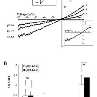 In situ hybridization of chicken TASK-1 expression in