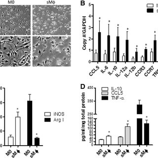 Macrophage activation by transforming growth factor (TGF