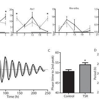 (A) Pyruvate tolerance test in control and TSR mice (n = 5