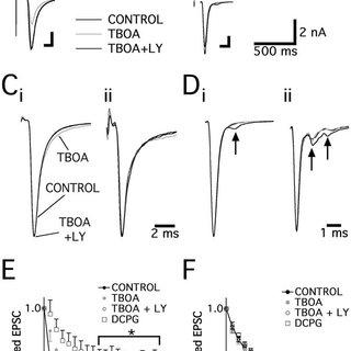 (PDF) Glutamate Transporter Studies Reveal the Pruning of