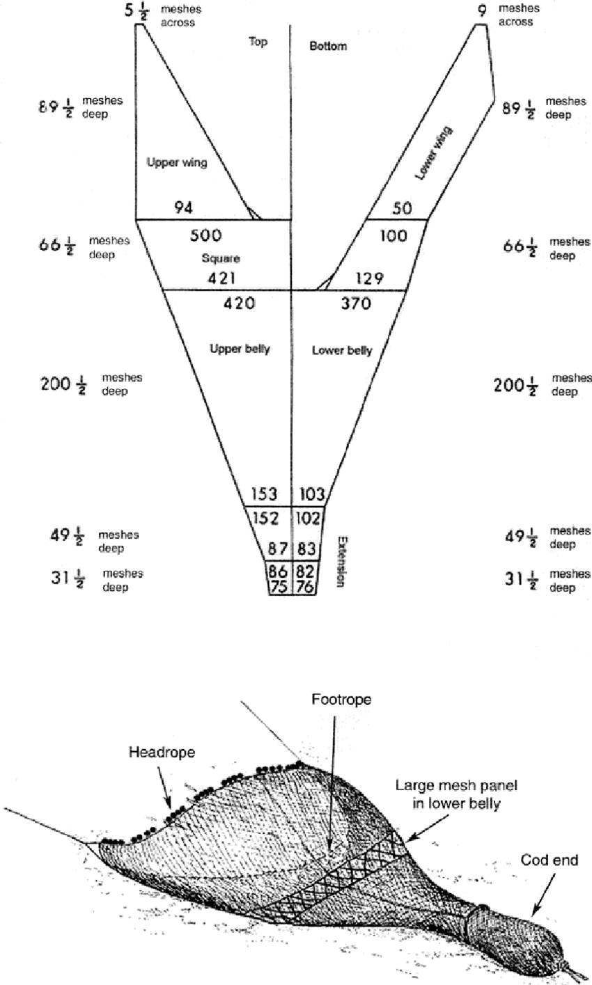 hight resolution of  diagram of the nets used in the study and the placement of the large