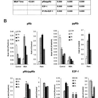Western blot analyses of IGF-IR, ppAkt, and total Akt in
