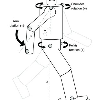 (PDF) Control and function of arm swing in human walking
