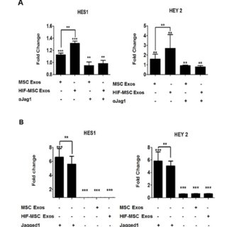 Notch target genes in HUVECs are upregulated by exosomes
