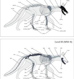 percentage survival of arctic fox bones for level ii and level iii fox drawing [ 850 x 1145 Pixel ]