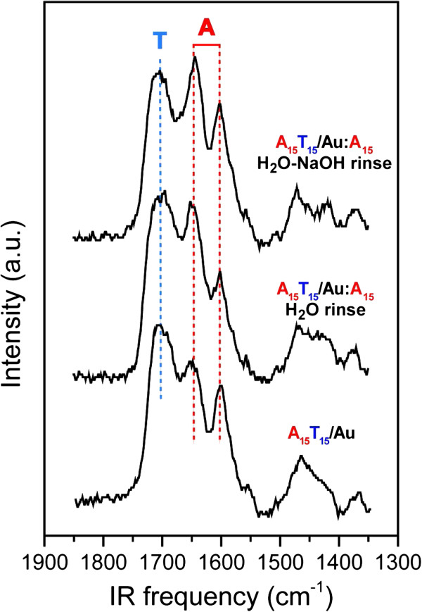 IRRAS spectra of the A15T15 film in an unhybridized state