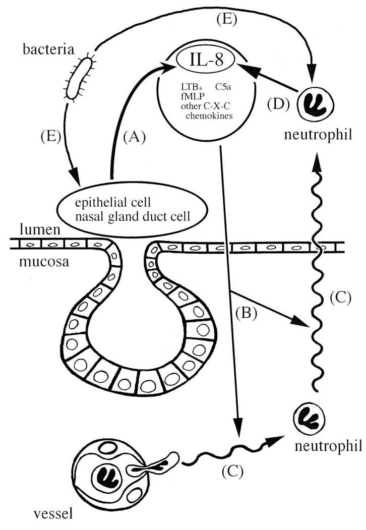 diagram of sinus infection