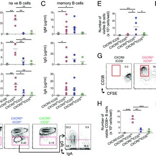 (PDF) Human tonsil B-cell lymphoma 6 (BCL6)-expressing CD4