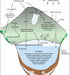 a diagrammatic representation of the aquatic ecosystem thea diagrammatic representation of the aquatic ecosystem the ecosystem [ 850 x 1040 Pixel ]