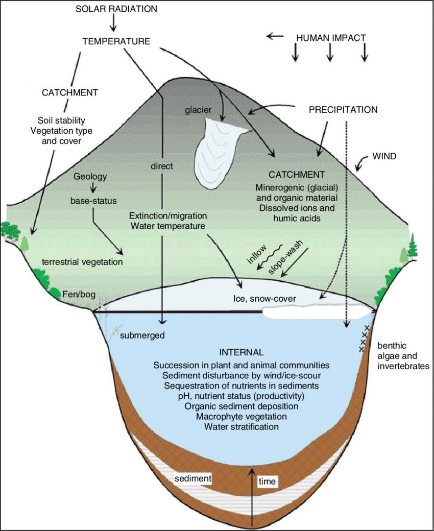 medium resolution of a diagrammatic representation of the aquatic ecosystem thea diagrammatic representation of the aquatic ecosystem the ecosystem