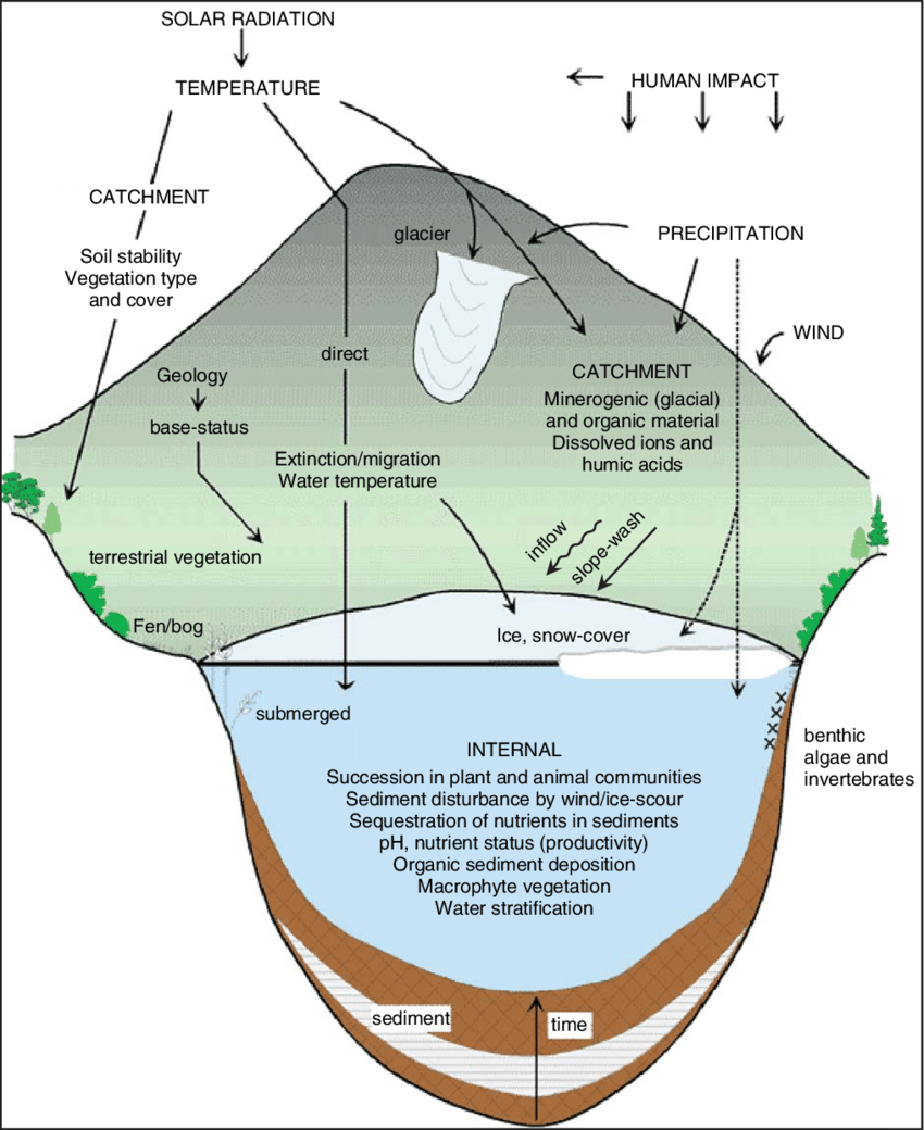 hight resolution of a diagrammatic representation of the aquatic ecosystem thea diagrammatic representation of the aquatic ecosystem the ecosystem