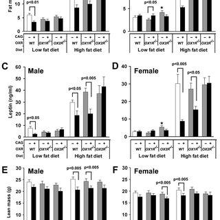 Characterization of OXA-immunoreactive myenteric neurons