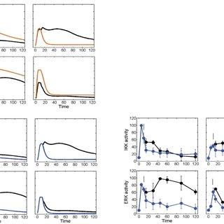 (PDF) Stimulus-Dependent Inhibitor of Apoptosis Protein