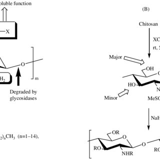 Strategy for the substitution of sugars to chitosan by