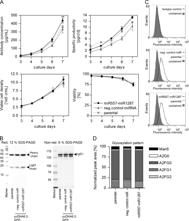 Stable miRNA expression enhances the productivity of CHO
