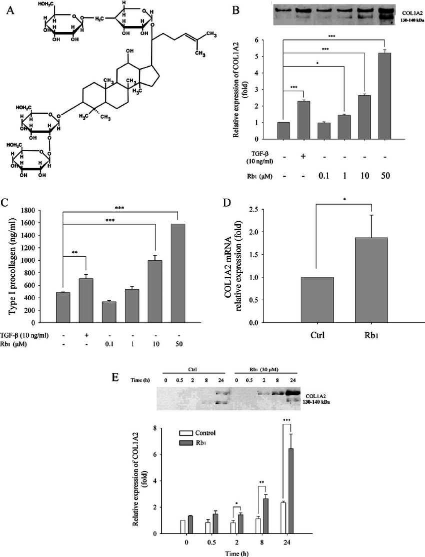 Ginsenoside Rb 1 induces type I collagen expression in