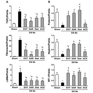 Expression of the podocyte proteins WT-1, nephrin and