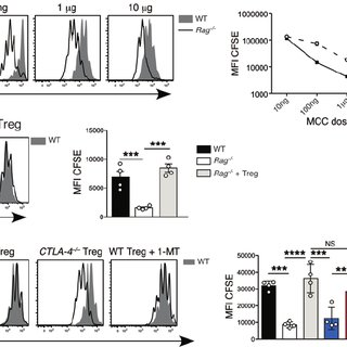 (PDF) Selective Treg reconstitution during lymphopenia