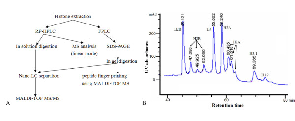 Isolation and purification of soybean core histone from