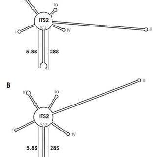 8 HPLC chromatograms of domoic acid (DA) analysis. (a) DA