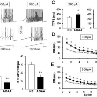 CFA injection increases the number of action potentials