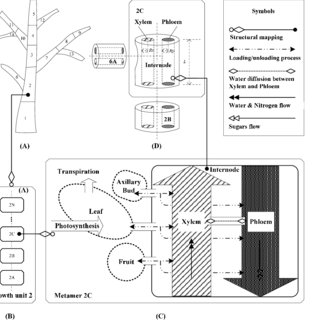 (PDF) Incorporating Graph Automata into Plant Growth