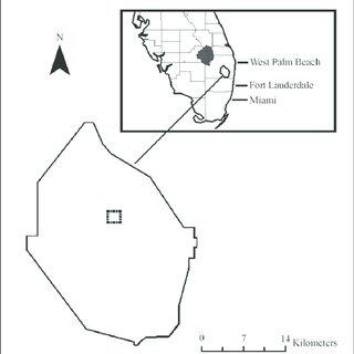 (PDF) Old World Climbing Fern (Lygodium microphyllum