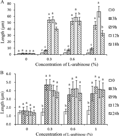 Effects of arabinose concentrations on the lengths of E