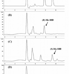 hplc spectra of methyl r 3hb and methyl s 3hb standards a download scientific diagram [ 850 x 1285 Pixel ]