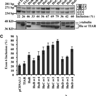 (PDF) Promotion of exon 6 inclusion in HuD pre-mRNA by Hu