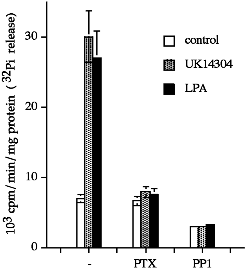 hight resolution of pertussis toxin and pp1 block the agonist stimulated activity of shp 2 mdck tag3 cells were pretreated with 625 ng ml pertussis toxin ptx overnight or