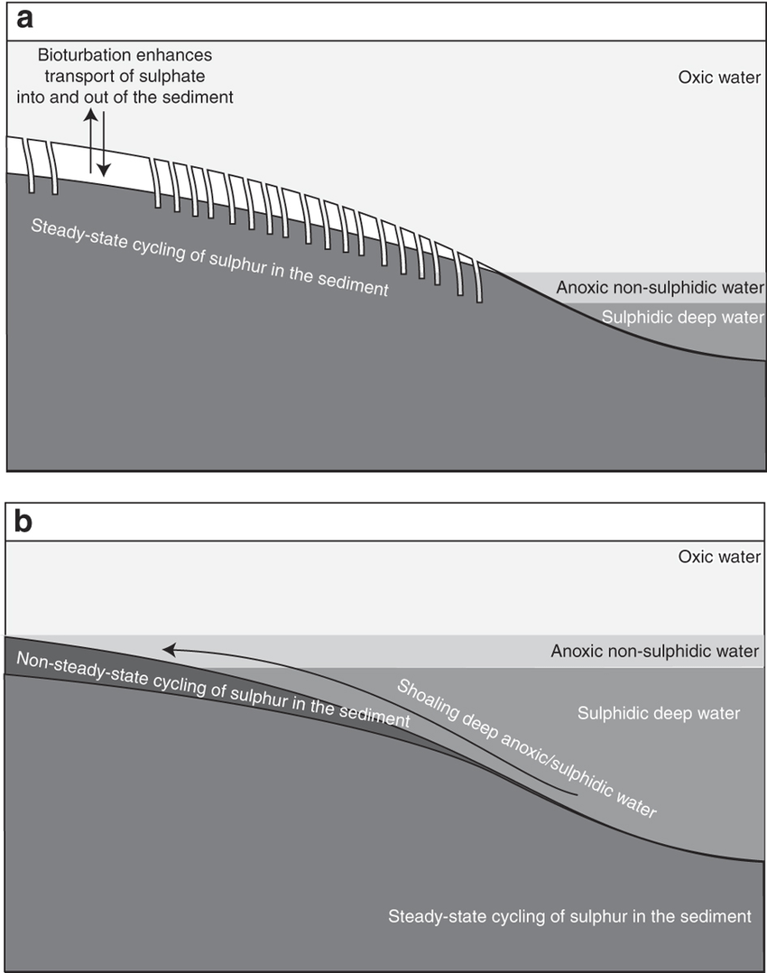 medium resolution of a cartoon representing the sulphur cycle associated with the shoaling deep anoxic water during the latest