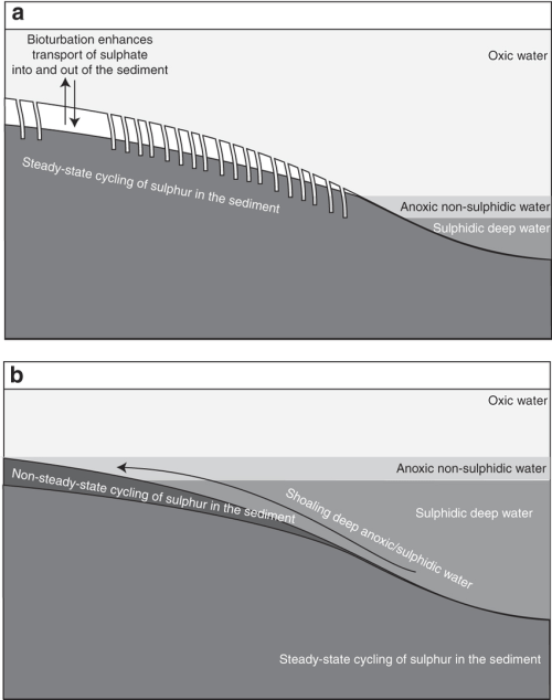 small resolution of a cartoon representing the sulphur cycle associated with the shoaling deep anoxic water during the latest
