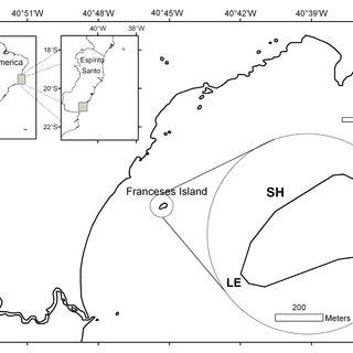 (PDF) Fish diversity of a southwestern Atlantic coastal