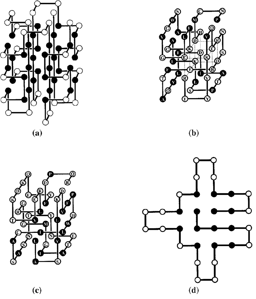 medium resolution of 5 simple lattice protein model examples a one of three ground state