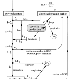 flow diagram of the model illustrating sources sinks and cycling processes parameterization of [ 850 x 1103 Pixel ]