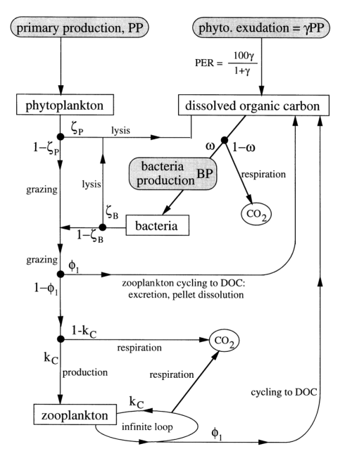 small resolution of flow diagram of the model illustrating sources sinks and cycling processes parameterization of
