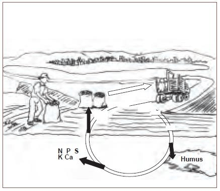 Open Cycle Agroecosystem from The Importance of Soil