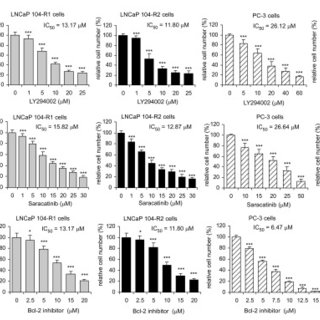 Protein expression of total Akt, Akt1, Akt2, phospho-Akt