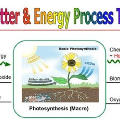Diagram With Inputs And Outputs Of Photosynthesis Process Isuzu Rodeo Radio Wiring Identifying Matter Energy At The Macro